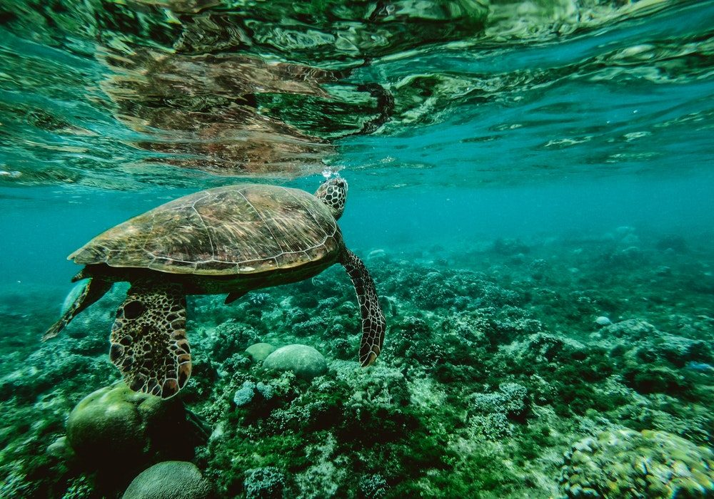 Guide To The Marine Turtle Life In Queensland